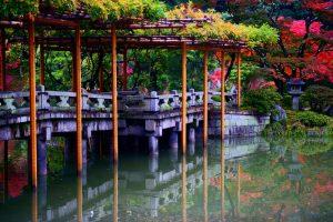 fotos zen