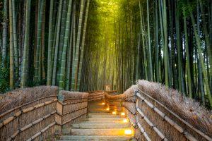 imagenes zen