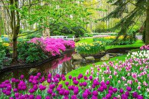 jardin zen con agua